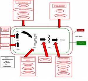 640px-Antibiotika-mekanisme