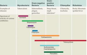 Antibiotika typer