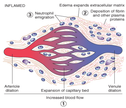 kronisk inflammation symptomer