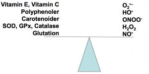 Ligevægt ved oxidative stress