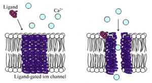 ionotrope-receptorer