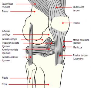 knae-ligamenter