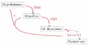 Thyroidea-aksen